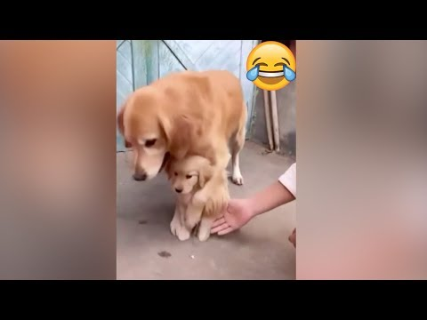 protective-dog-prevents-puppy-from-shaking-hands-with-owner