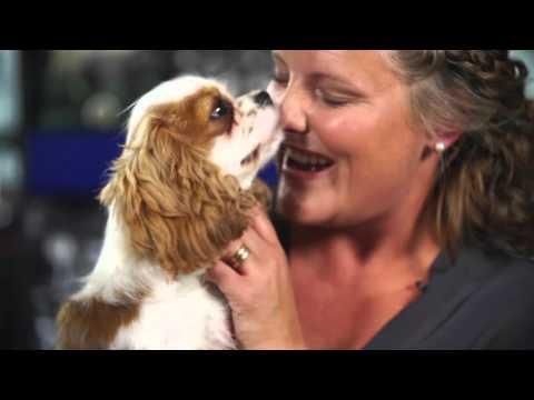 Futtertipps aus Schweden: Der Junghund