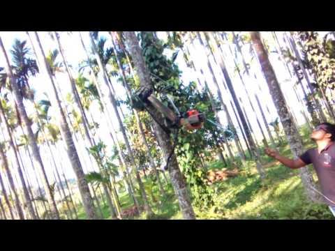 Betel nut reaper or arecanut harvester