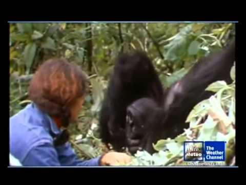 Dian Fossey e i gorilla