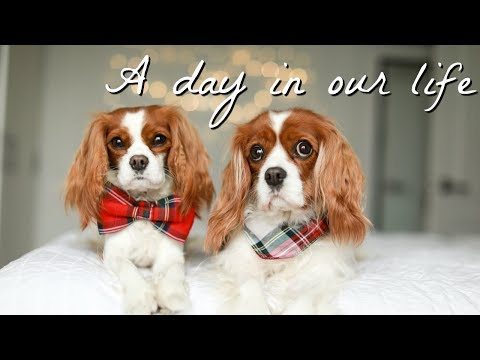 A DAY IN OUR LIFE | DOG VLOG EDITION | Narrated by dad