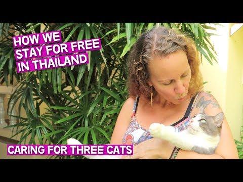 HOW WE STAY FOR FREE IN THAILAND // KAMALA, PHUKET // THAILAND TRAVEL VLOG