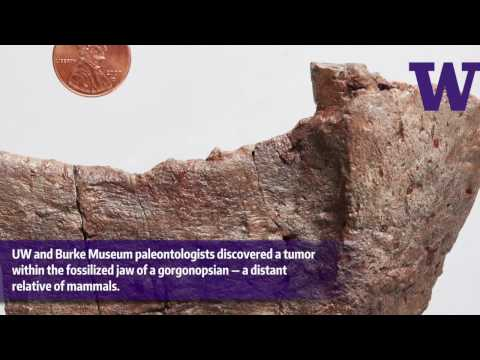 Fossilized evidence of a tumor in a 255-million-year-old mammal forerunner