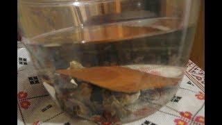 Вода из-под крана - как я делаю ее более полезной