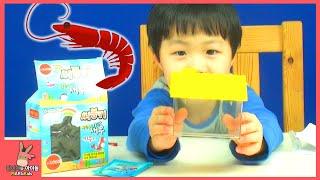 씨몽키 키우기 도전 1탄! 애완 바다새우? 귀요미 새우 등장 ♡ 어린이 장난감 놀이 sea monkeys! Pets sea shrimp | 말이야와아이들 MariAndKids