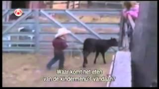 Animale comice mori de ras   www perfuzia org