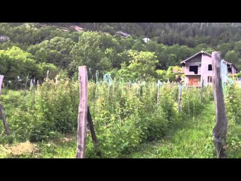 Biodiverse Organic in Bosnian Highlands