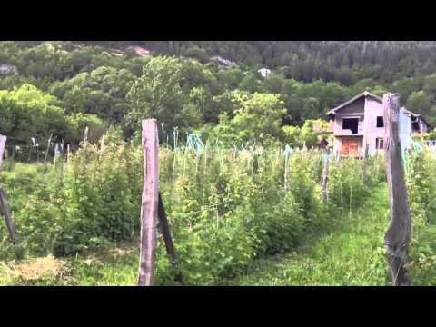 Biodiverse Organic in Bosnian Highlands