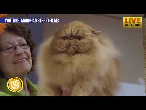 Cat Competition Featured in New Netflix Cat Show Documentary