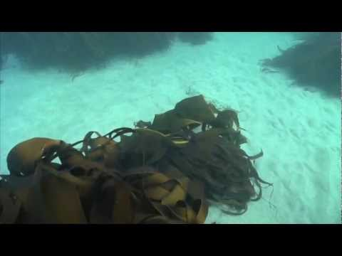 UAF - 2008 - Underwater research 6