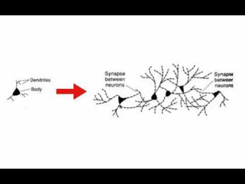 Brain Based Learning Model Neuroplasticity Youtube