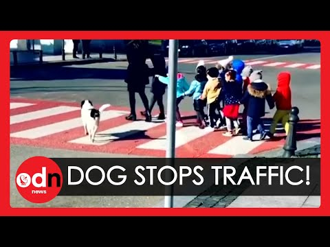 Dog Who Helps Kids to Cross the Road Becomes Star in Georgia