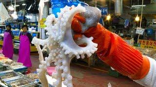 [서울 수산시장] 거대한 산낙지 탕탕이 / Gigant…