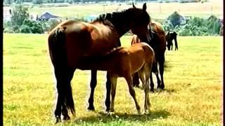 Русская рысистая порода лошадей(, 2014-10-05T00:49:51.000Z)
