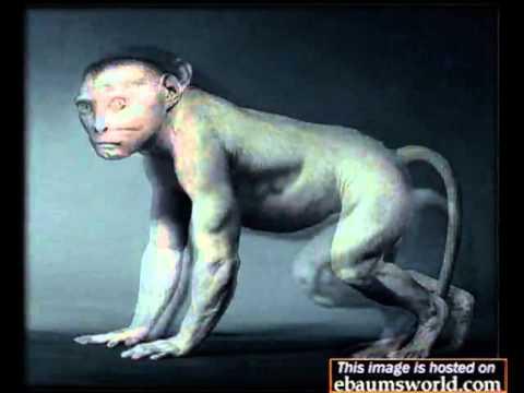 sự tiến hóa của con người.flv
