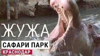 Жужа — краснодарский бегемот. Воскресная прогулка в сафари парк