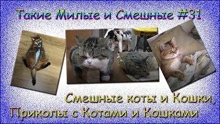 СМЕШНЫЕ КОТЫ И КОШКИ, ПРИКОЛЫ С КОТАМИ И КОШКАМИ . Такие Милые и Смешные #31
