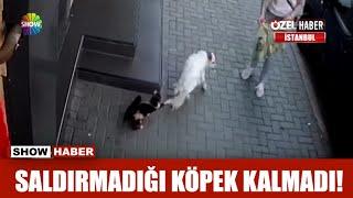 Saldırmadığı köpek kalmadı!