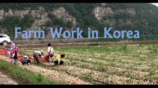 Farm Work in Korea