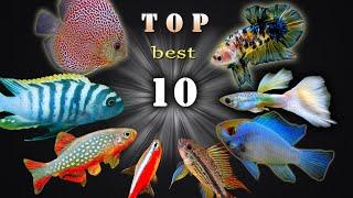 10 NAJPIĘKNIEJ ubarwionych RYB akwariowych