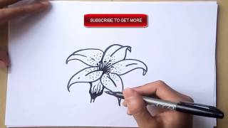 how to draw a lily.