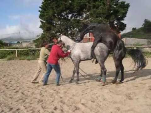 Horse breeding - YouTube