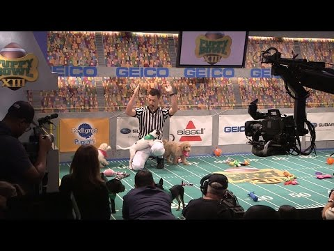 Behind The Scenes Of This Year's Puppy Bowl Featuring 3 Special Needs Dogs