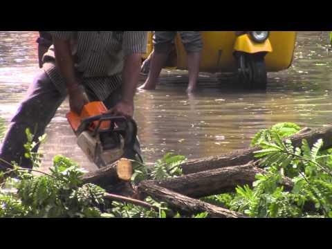 Tree down in Ashok Nagar - Chennai flood 2015