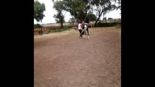 Santa Rita, Jalisco: Adiestramiento de Caballos de Rienda Charra y parte de La Alta Escuela, 3