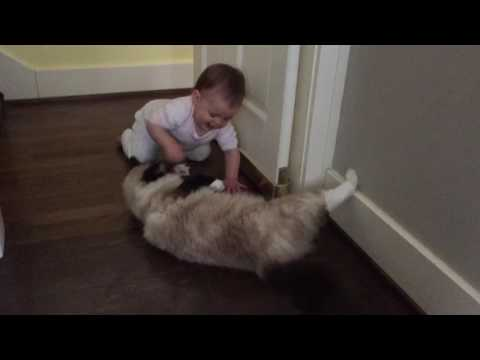 Ragdoll Flop with a Baby! Ragdoll Huck Flops for Baby Molly