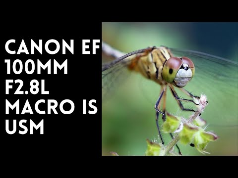 Canon EF 100mm f2.8L Macro IS USM - YouTube