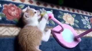 おもちゃで遊ぶようになりました。