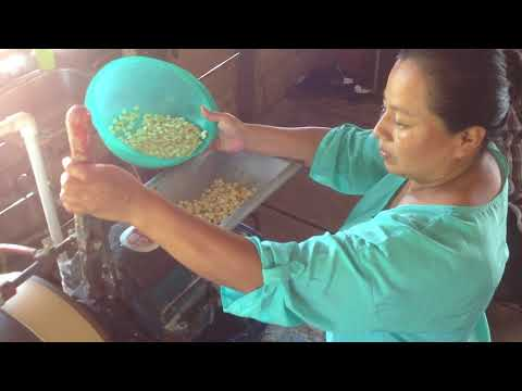 Mayan Woman Grinding Corn for Tortillas in Belize