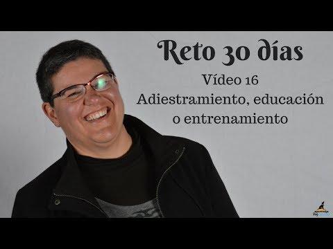 #Reto30días Vídeo 16 | Adiestramiento, educación o entrenamiento