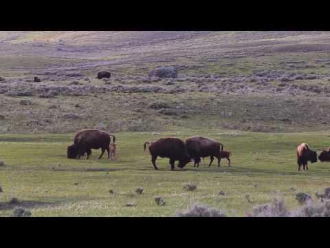 Yellowstone May 2017