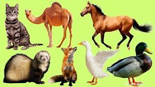 Животные для детей|Учим домашних животных|Учим названия и звуки домашних животных| Домашние животные