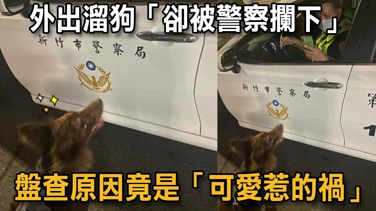 外出溜狗「卻被警察攔下」 盤查原因竟是「可愛惹的禍」|狗狗故事|警察