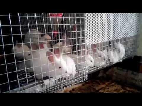 Чем кролики болеют