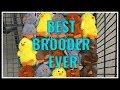 Your BEST Chicken BROODER!