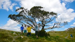 Measuring the Mount Stirling Summit Tree - 3 minute version