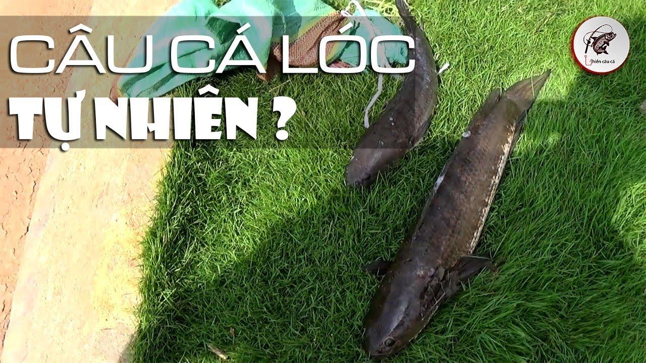 Câu Cá Lóc Tự Nhiên - Cảnh Đẹp Và Trái Đắng ?  Ghiền Câu Cá
