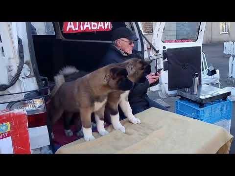 Собачий базар. Староконный рынок. Одесса.
