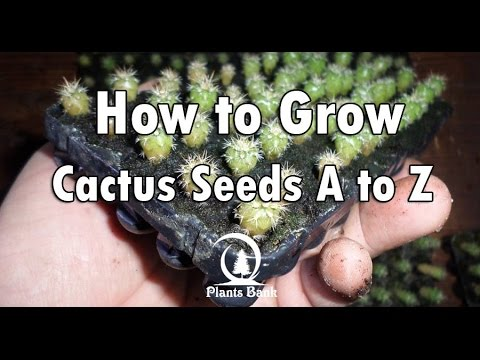 how to take care of a cactus cactus