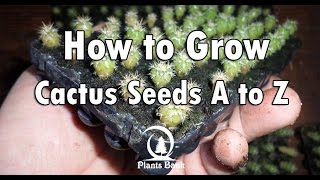 How to Grow Cactus from Seed A to Z