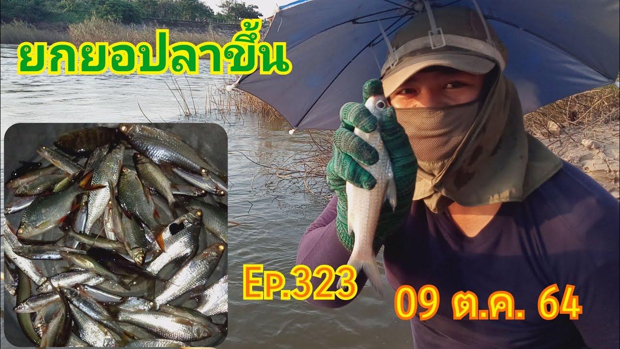 ยกยอปลาขึ้นน้ำวังลดก็ยังม่วนยังหมานยามเย็น 09/10/64 Ep.323