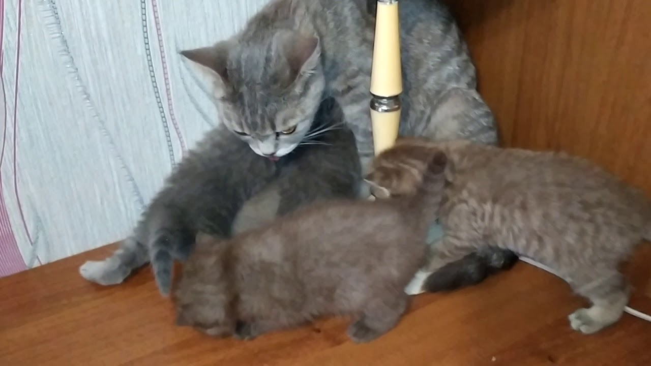 Кошка с котятами VID 20200117 153120 - YouTube