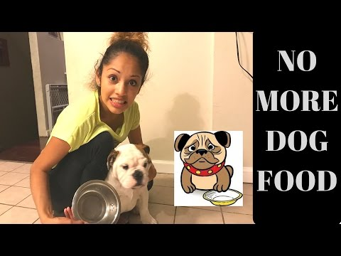 NO MORE DOG FOOD! WHAT'S THE BEST DOG FOOD? #VEDA