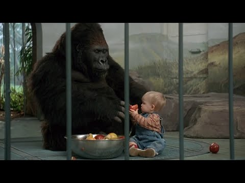 大猩猩好心照顾人类小孩,连坏人都不敢靠近,一部动物喜剧电影