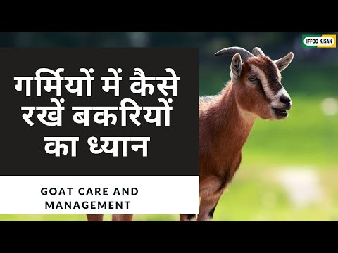 Goat Care And Management