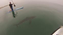 Paddle boarding oceanside ca